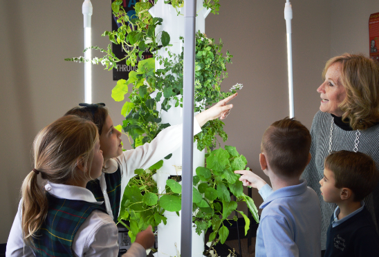 Harvesting Tower Garden